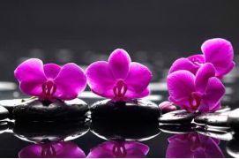 Орхидеи на камнях, цветы