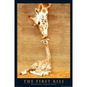 Первый поцелуй, Жирафы
